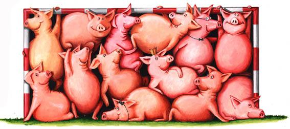 Pigs-im-tor6