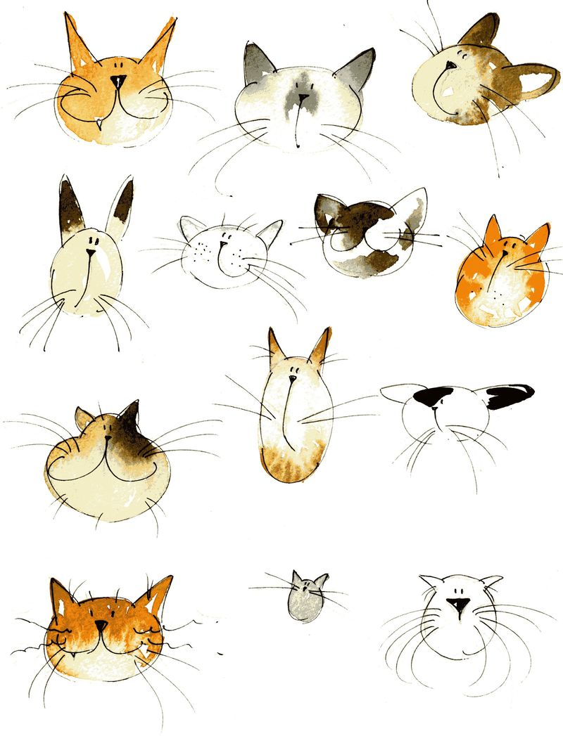 Jill Latter. Cat 3