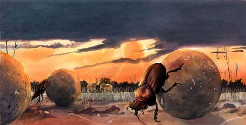 Alan-Marks-Beetles-10~11
