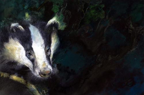 Alan Marks Badger Cull