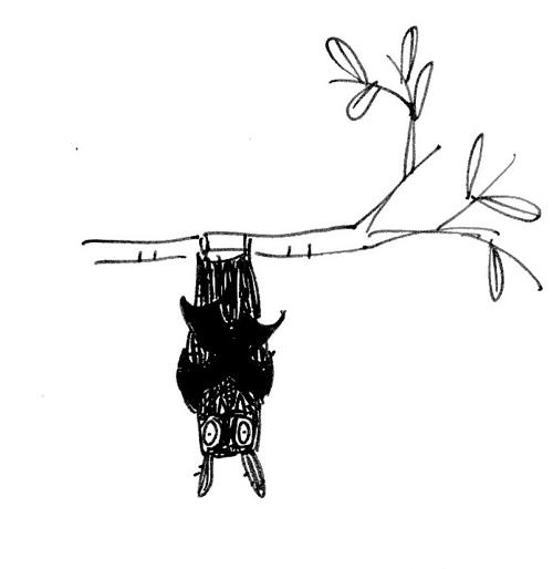 Jane Eccles bat1